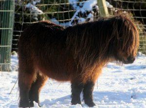 Schermaschine Pferd Langhaar Winter